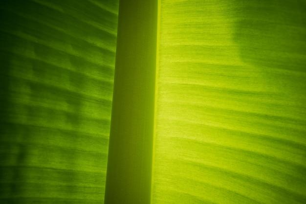 Liść bananowca blisko szczegółowe tło