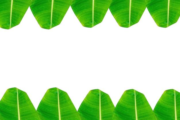 Liść bananowca, zielone liście, z miejsca na kopię na białym tle