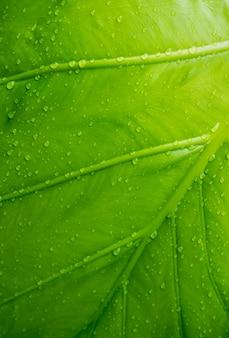 Liść bananowca, zielony liść, abstrakcyjne tło