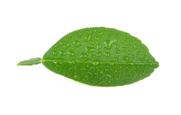 Liść cytryny z kroplami wody na białym tle