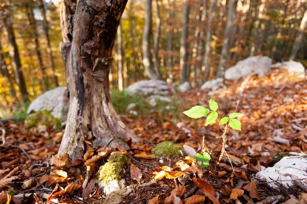 Liść dzikich roślin z bliska, jesień