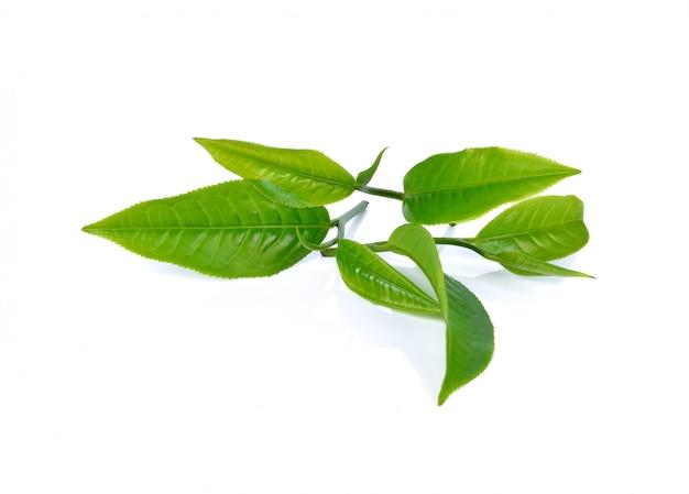 Liść herbaty na białym tle