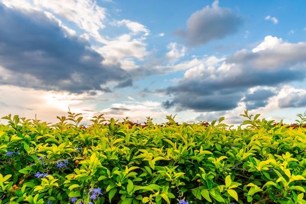 Liść i kwiat z obłoczną niebo kopii przestrzenią
