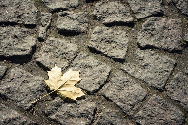Liść klonowy na kamiennych płytach chodnikowych