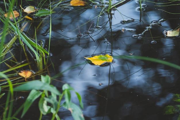 Liść klonu w wodzie, pływające jesienią liść klonu. kolorowe liście unoszące się w ciemnej wodzie jesieni. odbicie w wodzie jesienią. koncepcja sezonu. witaj, jesieni