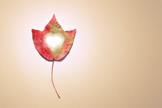Liść klonu z sercem w środku w pastelowym beżu. skopiuj miejsce kreatywny jesień natura sezon
