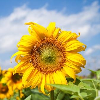 Liść kwiat roślina sezon letni