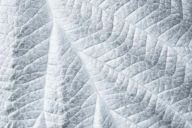 Liść makro tekstura dla czarno-białego monochromatycznego tła