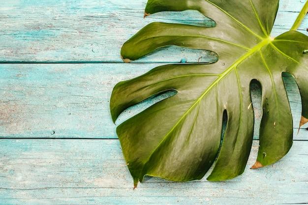 Liść monstera na modnym turkusowym drewnianym tle