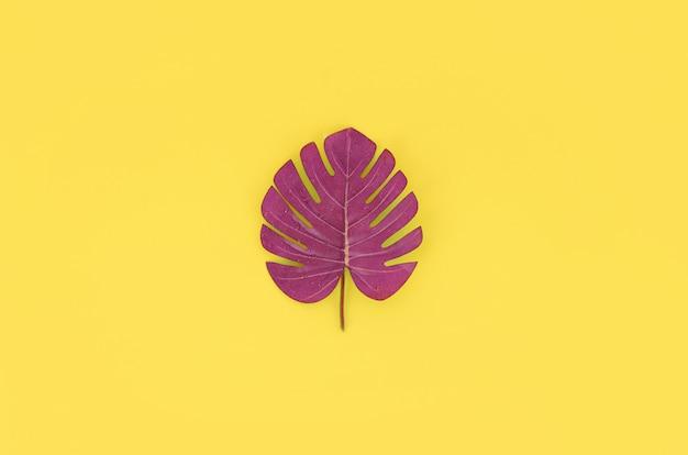 Liść monstera tropikalnej palmy leży na pastelowym kolorowym papierze.