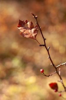 Liść na gałęzi z rozmytym tłem. selektywne skupienie płytkie na liściu. brązowe kolory.