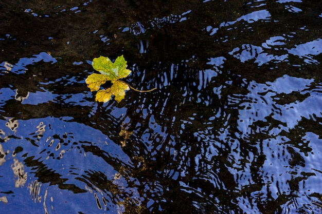 Liść na spokojnej wody powierzchni w parku