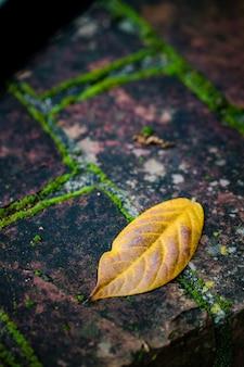 Liść na ziemi
