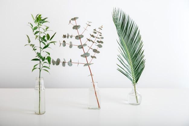Liść palmowy gałązka eukaliptusa zieleni w szklanych wazonach na białym tle. zestaw roślin tropikalnych