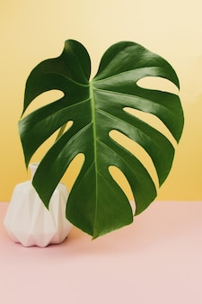 Liść palmowy monstera na różowym stole, różowy wazon.