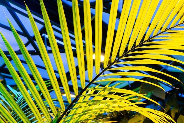 Liść palmowy na ciemnoniebieskim tle