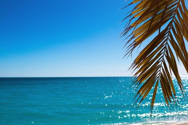 Liść palmowy na tle krajobrazu morskiego.