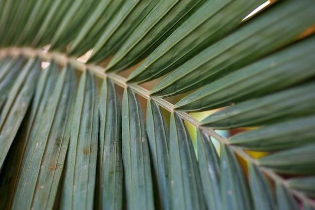 Liść palmowy z bliska tekstura tropikalny liść rośliny w klimacie tropikalnym dżungli wysokiej jakości zdjęcie