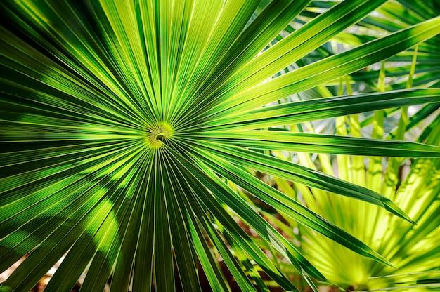 Liść palmy zielone tło. zdjęcie wysokiej jakości