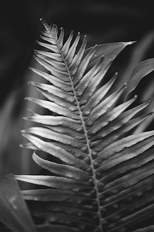Liść paproci z bliska w bw tle przyrody