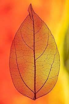 Liść podświetlany światłem czerwonym i pomarańczowym