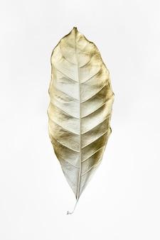 Liść pomalowany na złoto i biel na białym tle