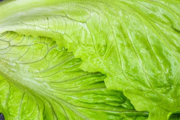 Liść sałaty