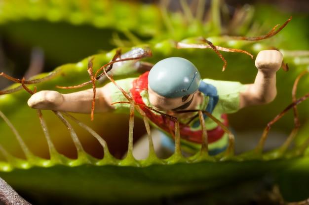 Liść wenus flytrap jedzenie miniaturowy mężczyzna