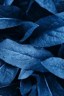 Liść z kroplami wody. teksturowane streszczenie niebieski.