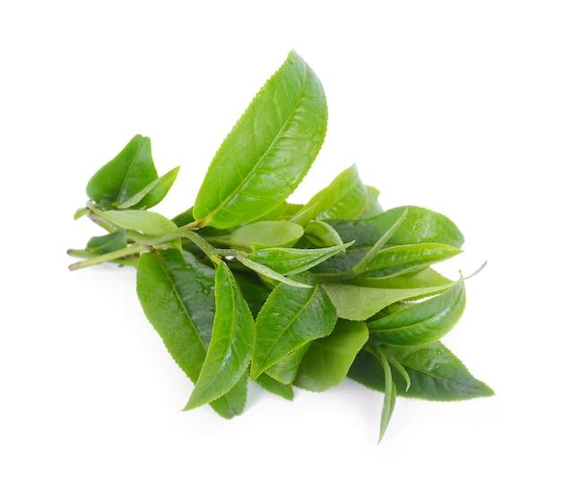 Liść zielonej herbaty na białym tle.