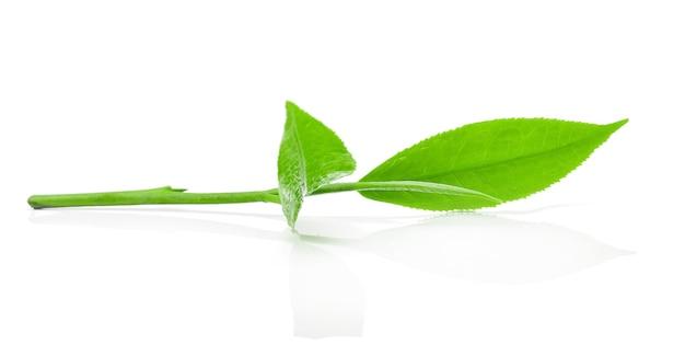 Liść zielonej herbaty z kroplami wody.