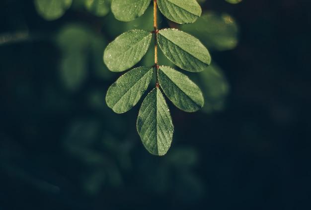 Liść zielony tło