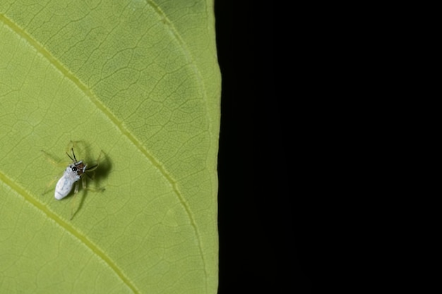 Liść zwierzę skok pająk małe zbliżenie
