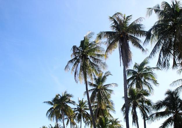 Liści palmowych drzewa na chmurze niebieskie niebo z zachodem słońca