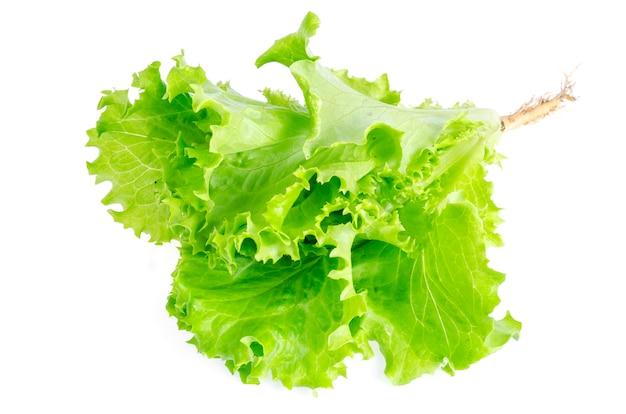 Liściasta zielona sałatka na białym tle. zdjęcie