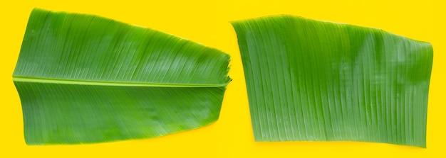Liście bananowca na żółtym tle.