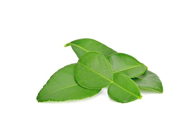 Liście bergamotki lub limonki kaffir na białym tle