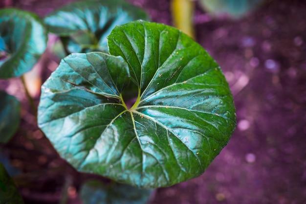 Liście botaniczne