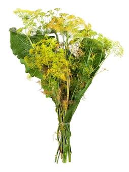 Liście chrzanu i kwiaty kopru na białym tle