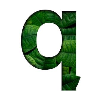 Liście czcionek q wykonane z żywych liści real w kształcie wyciętego papieru precious.