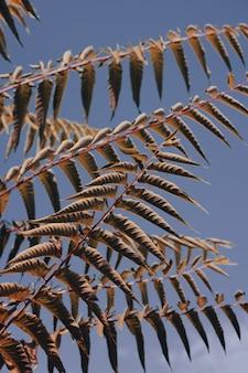 Liście drzew i tło błękitnego nieba