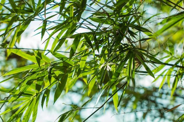 Liście drzew