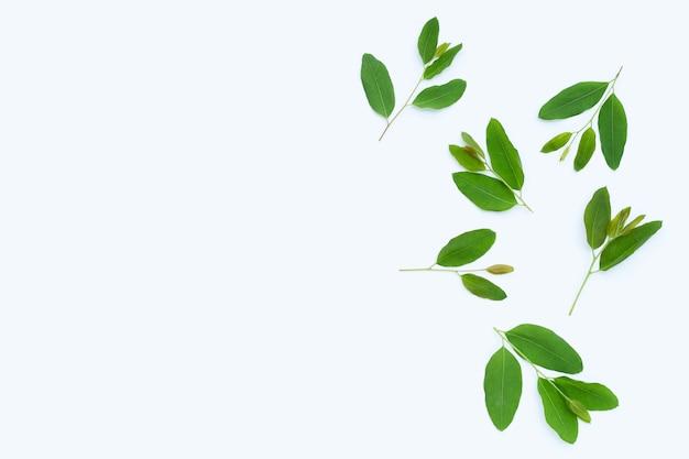 Liście eukaliptusa na białej powierzchni