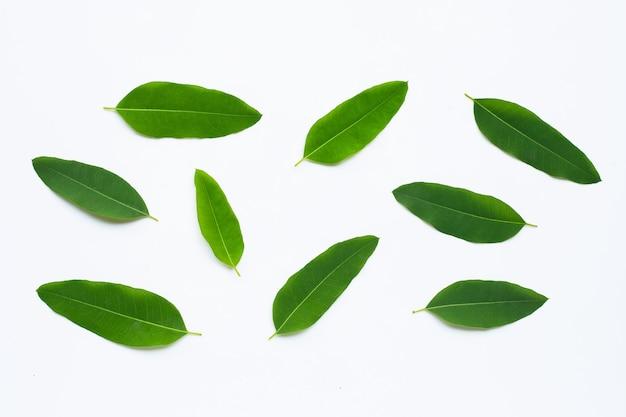 Liście eukaliptusa na białej ścianie. skopiuj miejsce