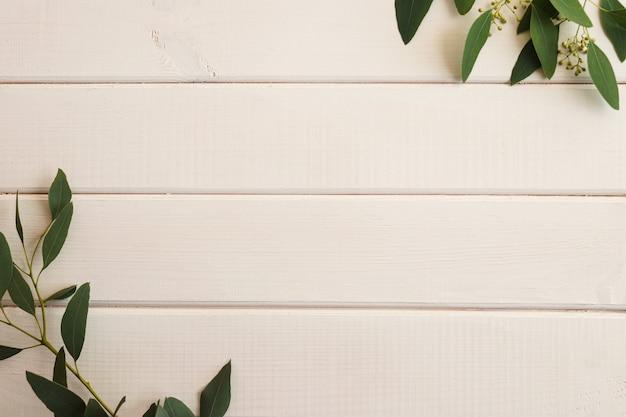 Liście eukaliptusa na białym drewnianym tle z miejscem na kopię, widok z góry