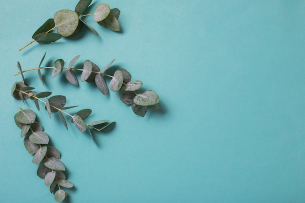 Liście eukaliptusa na tle papieru