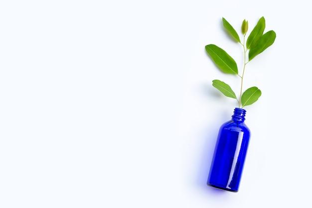 Liście eukaliptusa w niebieskiej butelce na białym tle.
