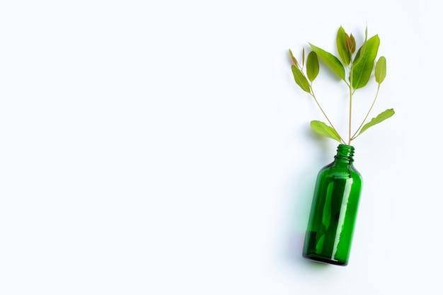 Liście eukaliptusa w zielonej butelce na białym tle.