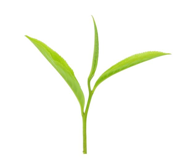 Liście herbaty na białym tle
