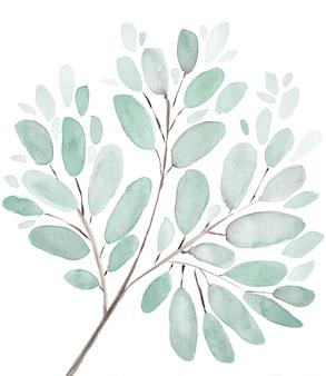 Liście i gałęzie akwarela ilustracja tło. zestaw ręcznie malowanych elementów kwiatowych. akwarela ilustracja botaniczna. eukaliptus, oliwka, zielone liście.